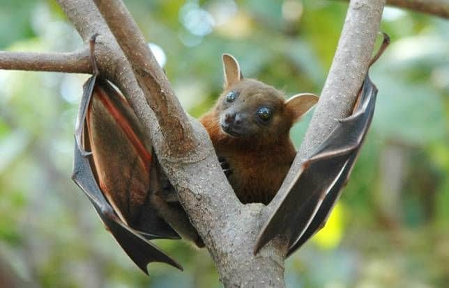 Bats are Terrifying: Here's Proof