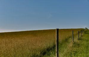 Crawford Field Image