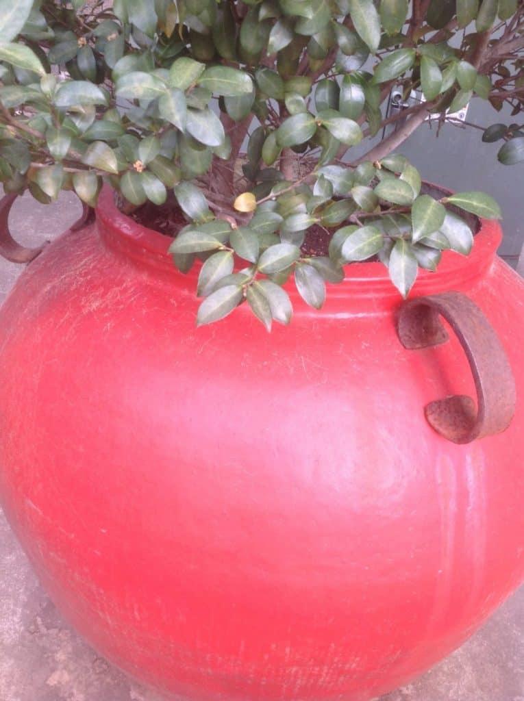 Cinnebar red pot