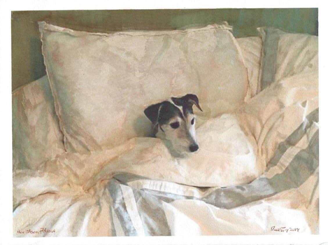Dog Friendly Durham establishments