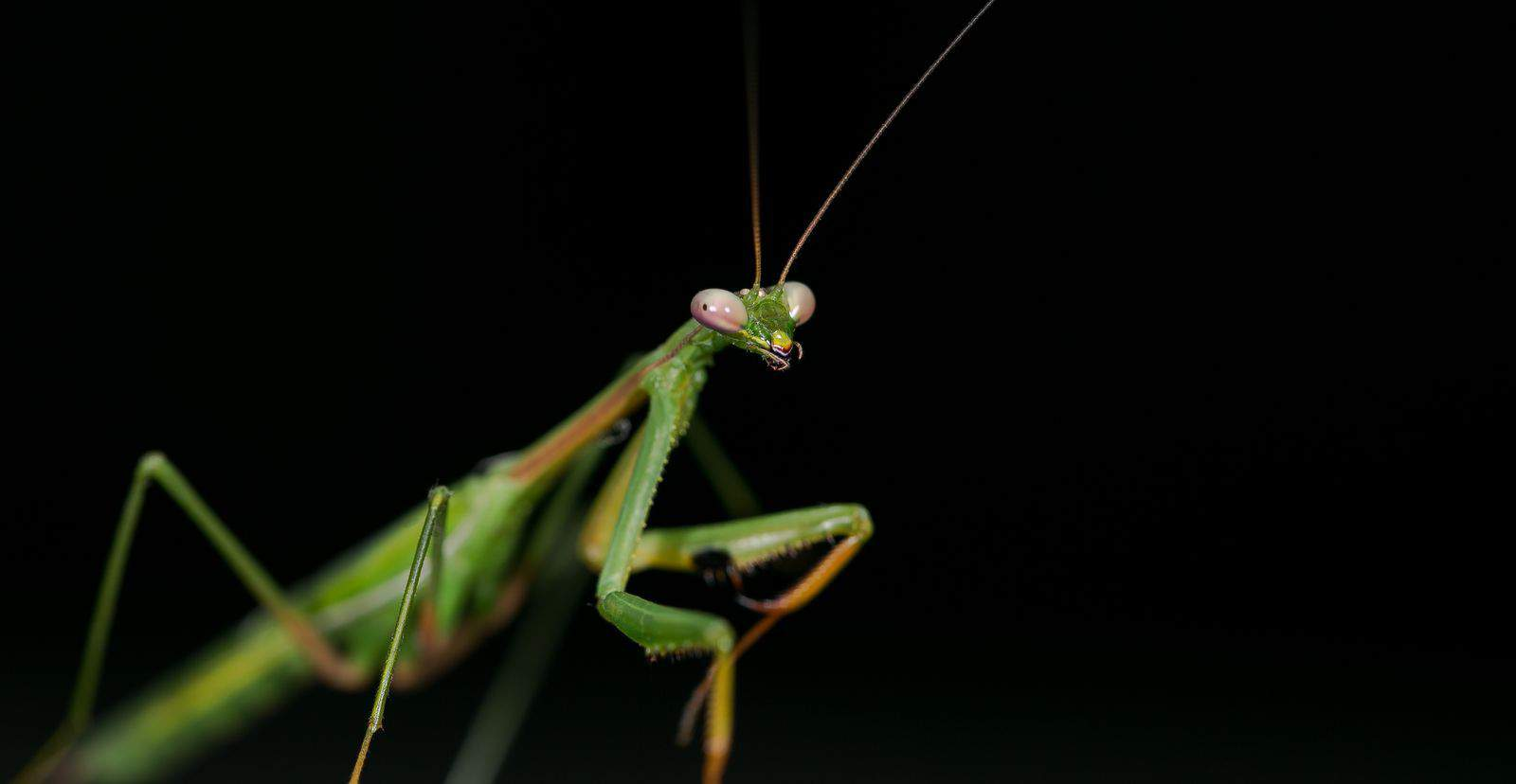 Praying Mantis are Durham Cool.