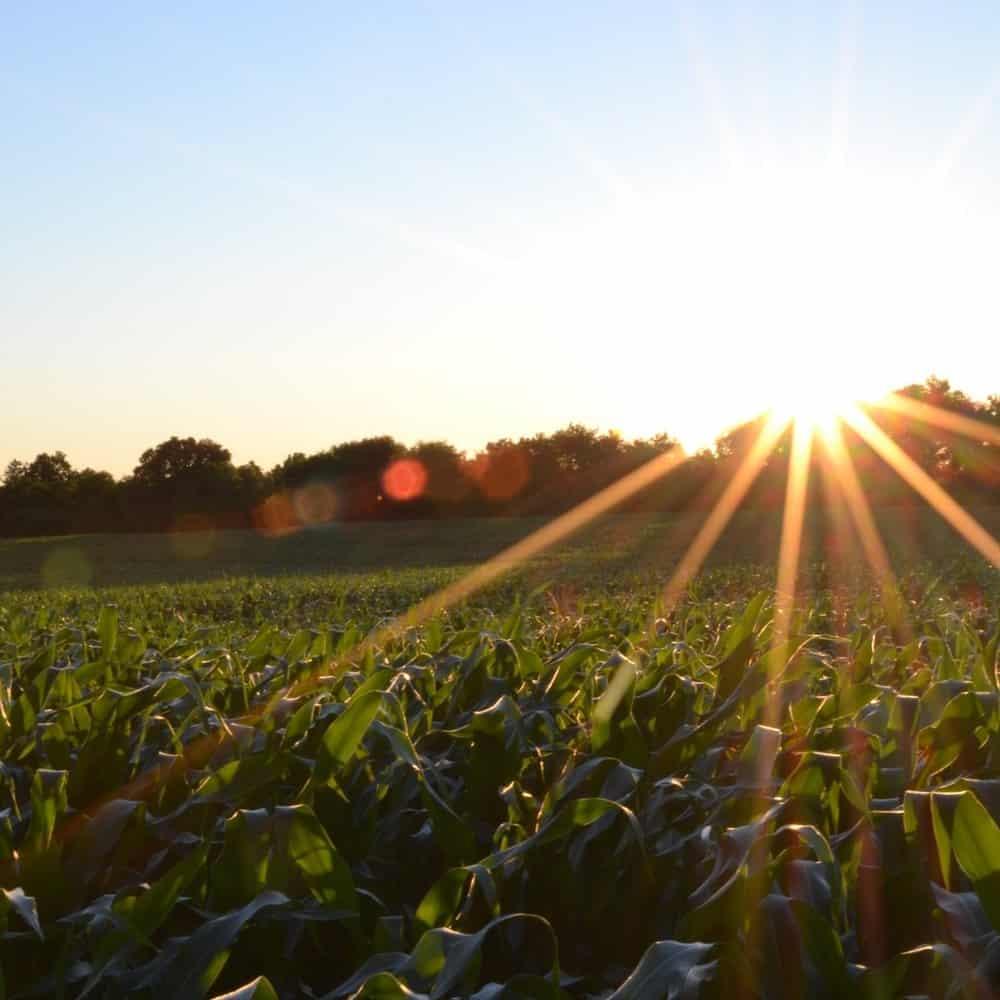 Wetrock Farm, Durham NC Opportunity