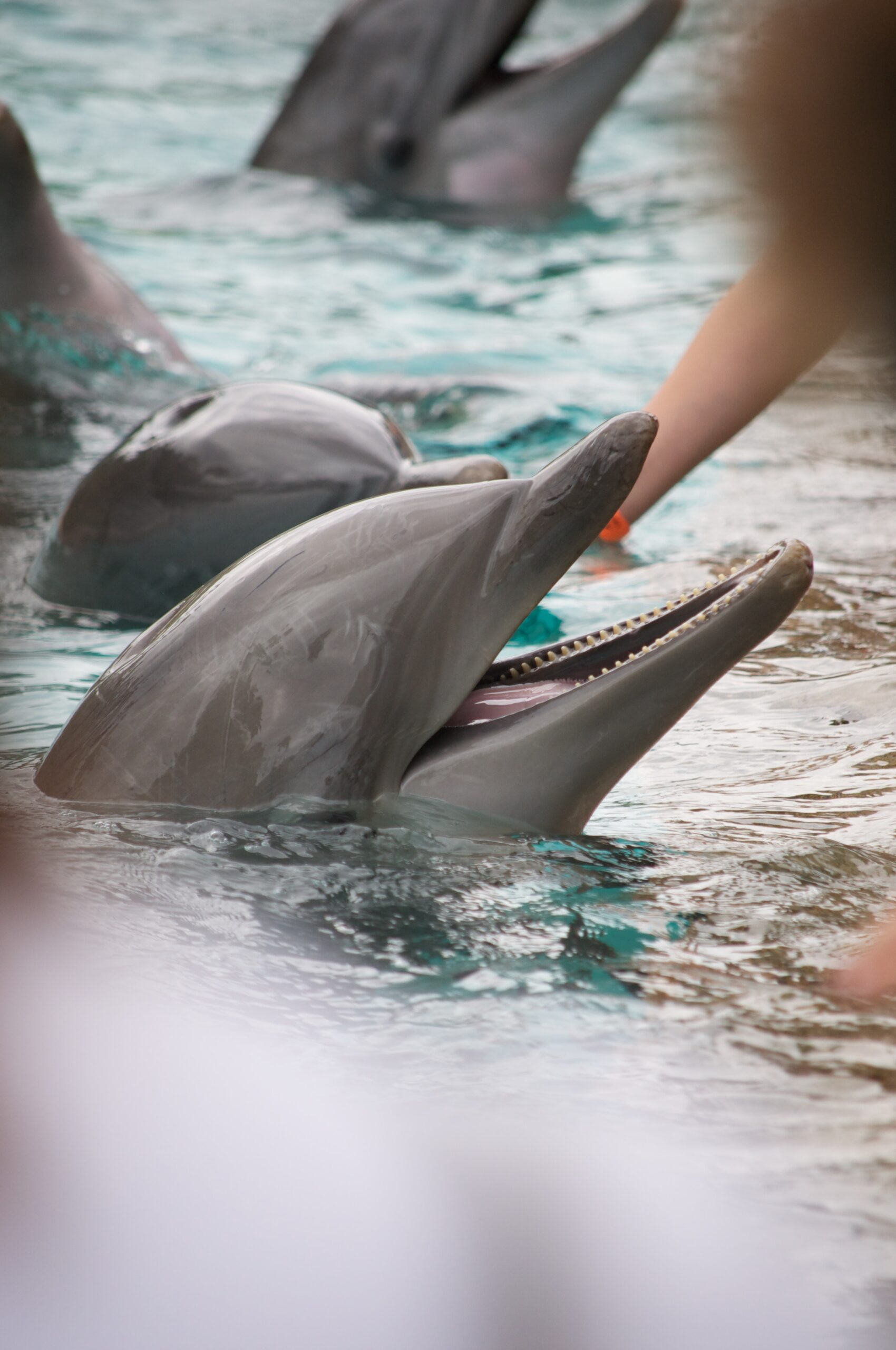 dan-dennis-Dolphins rising to surface for human touch-unsplash