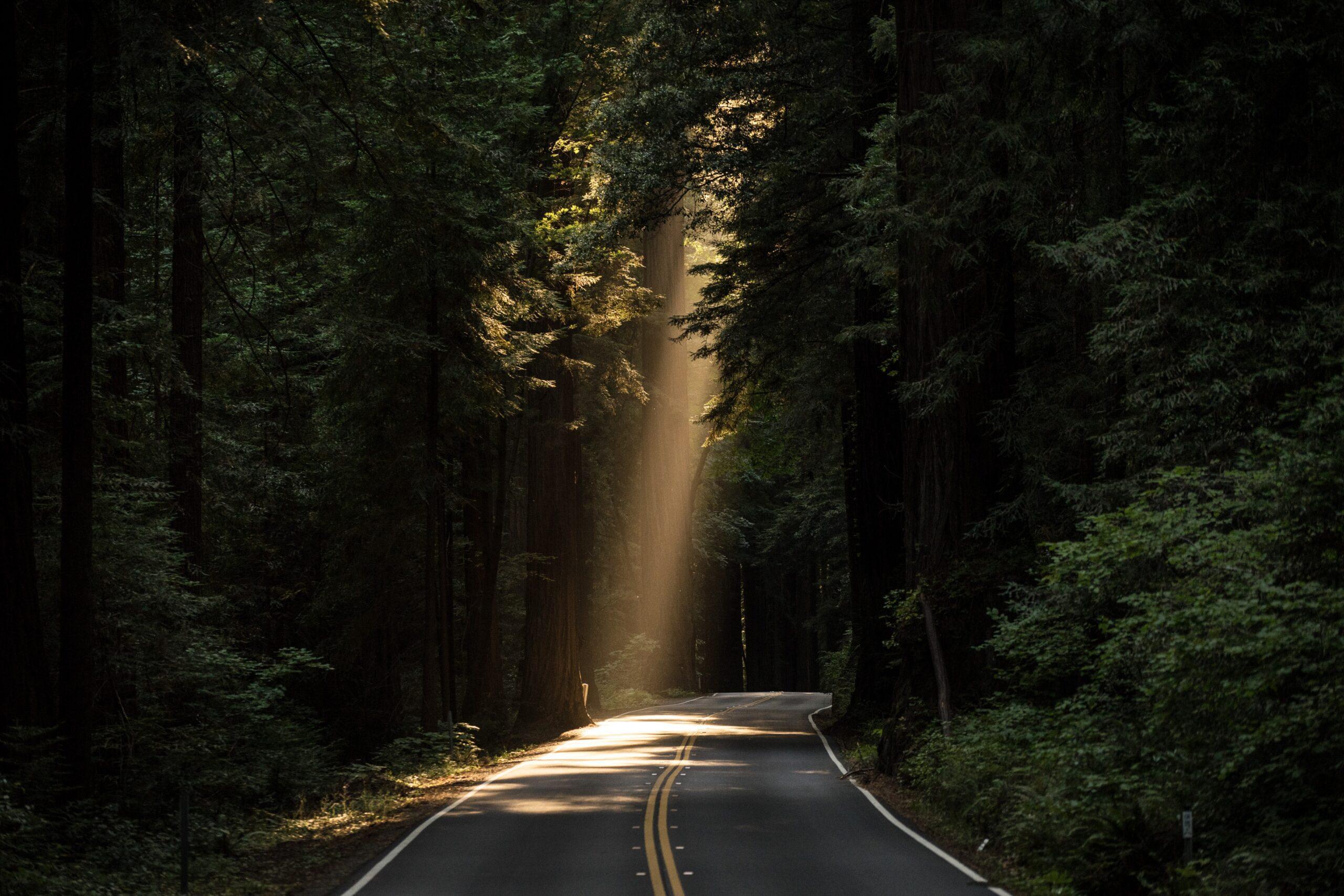 john-towner-Tree lined Country Road li-unsplash