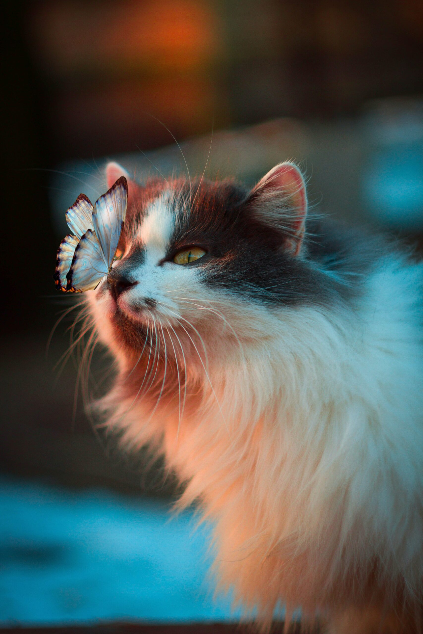 Fluffy cat with Butterfly landing on his nose by Karina Vorozheeva from Unsplash