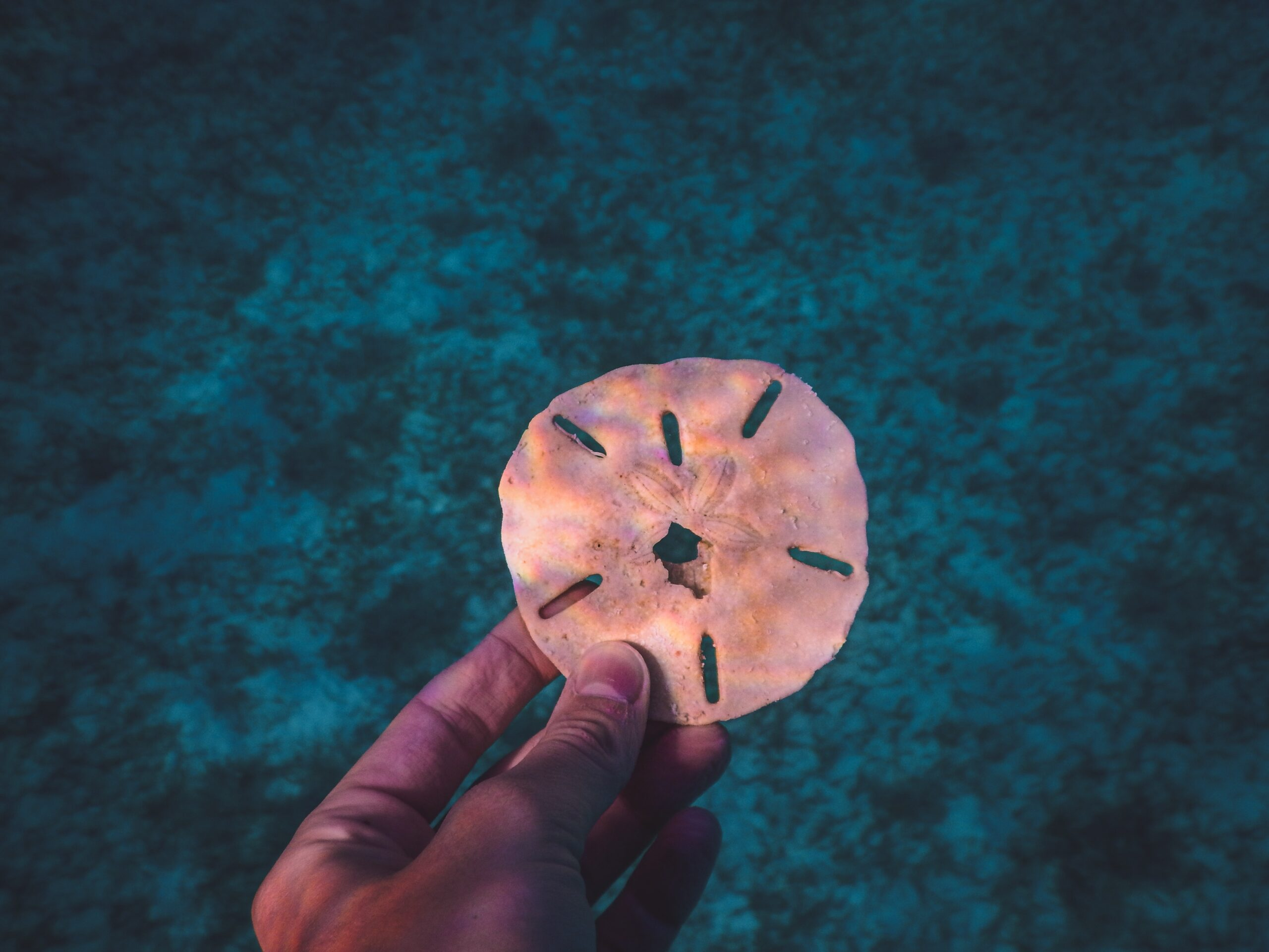 Sand Dollar in the hand close up with black coral background underwater by Analia Ferrario from Unsplash