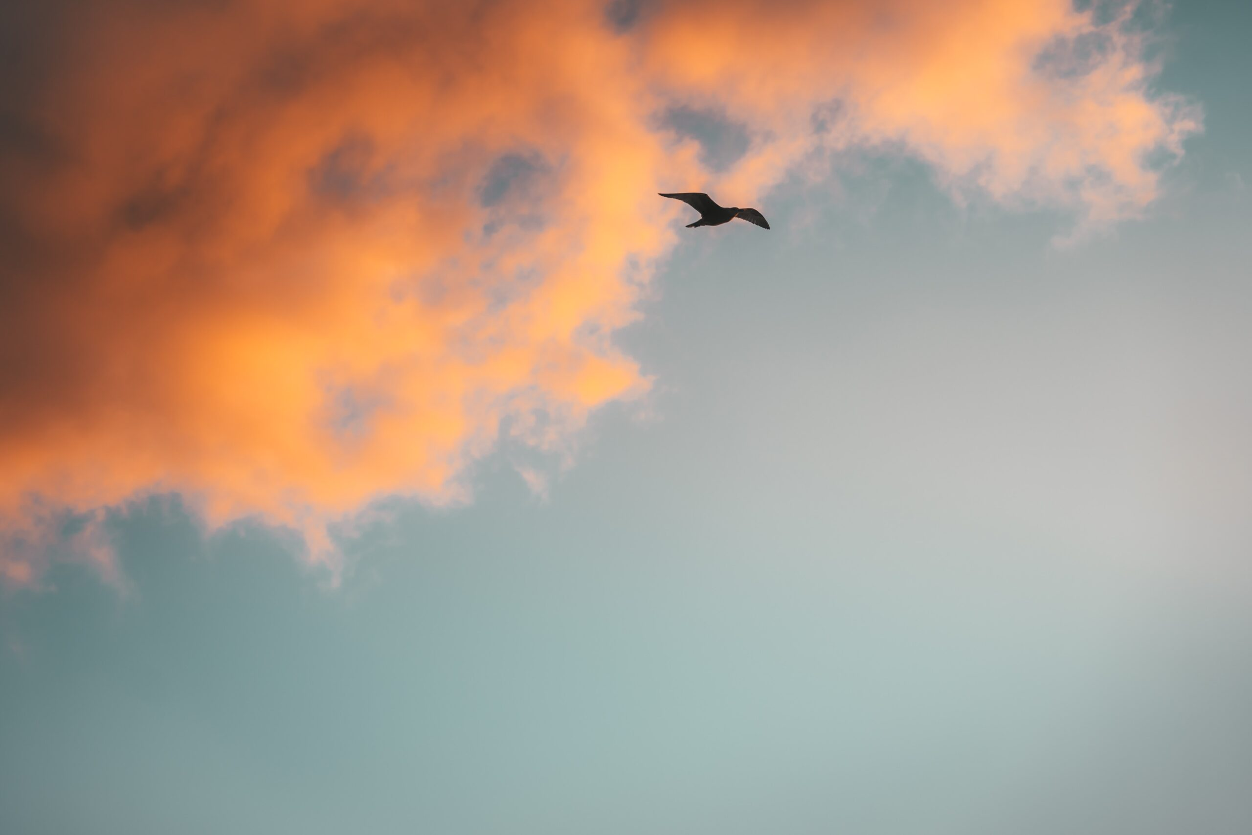 jason-pischke-Sun splashed clouds orange blue sky with Sea Gull soaring-unsplash