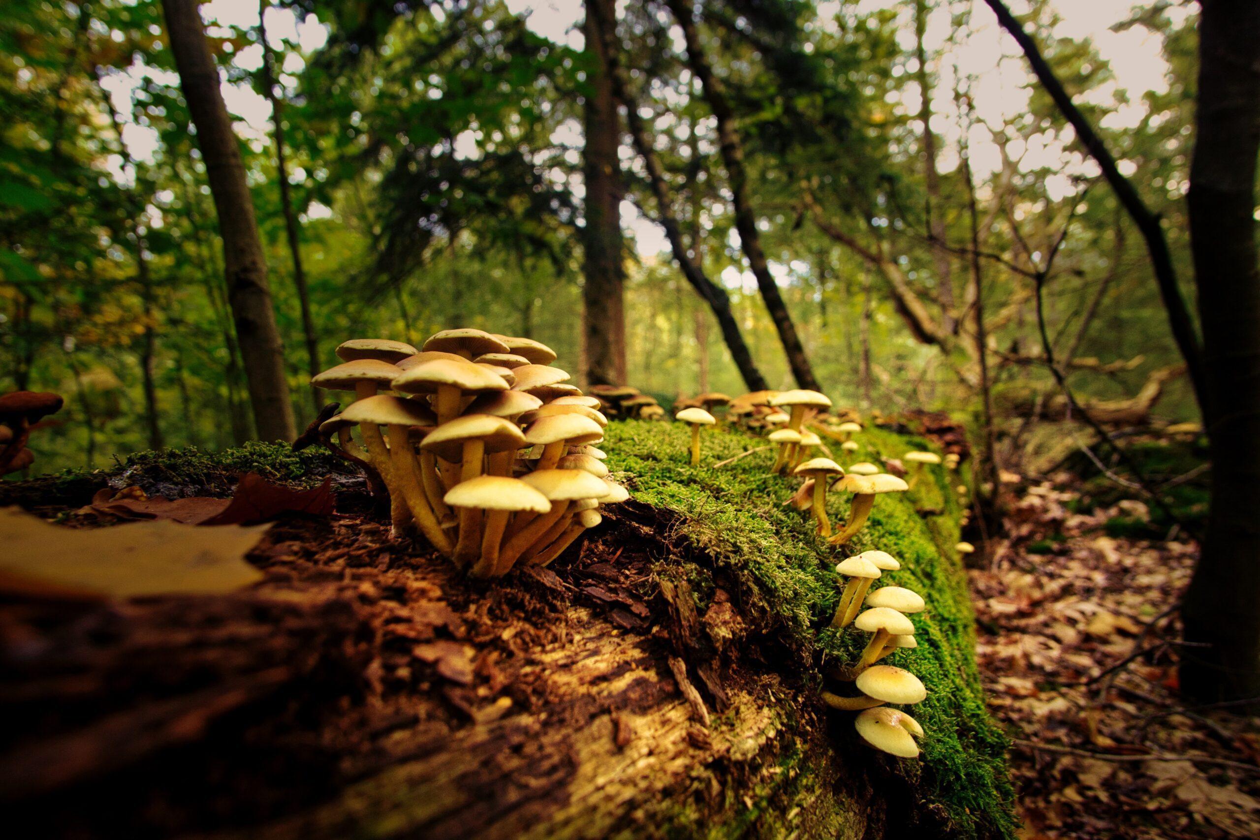 joran-quinten-Mushrooms -unsplash