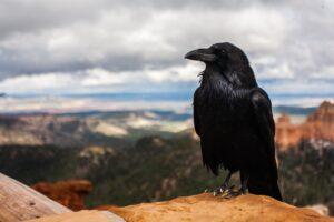 tyler-quiring-black crow profile in foreground with blurred dessert plateau landscape-unsplash