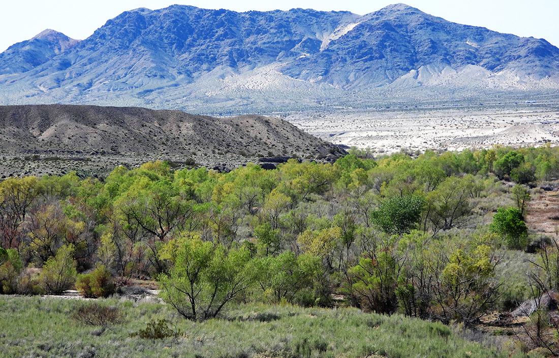 Oasis in the Mojave Desert