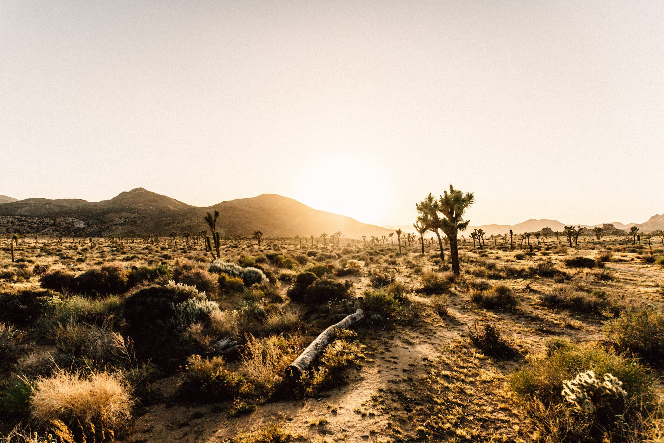 Mojave Desert scene by Andreas selter