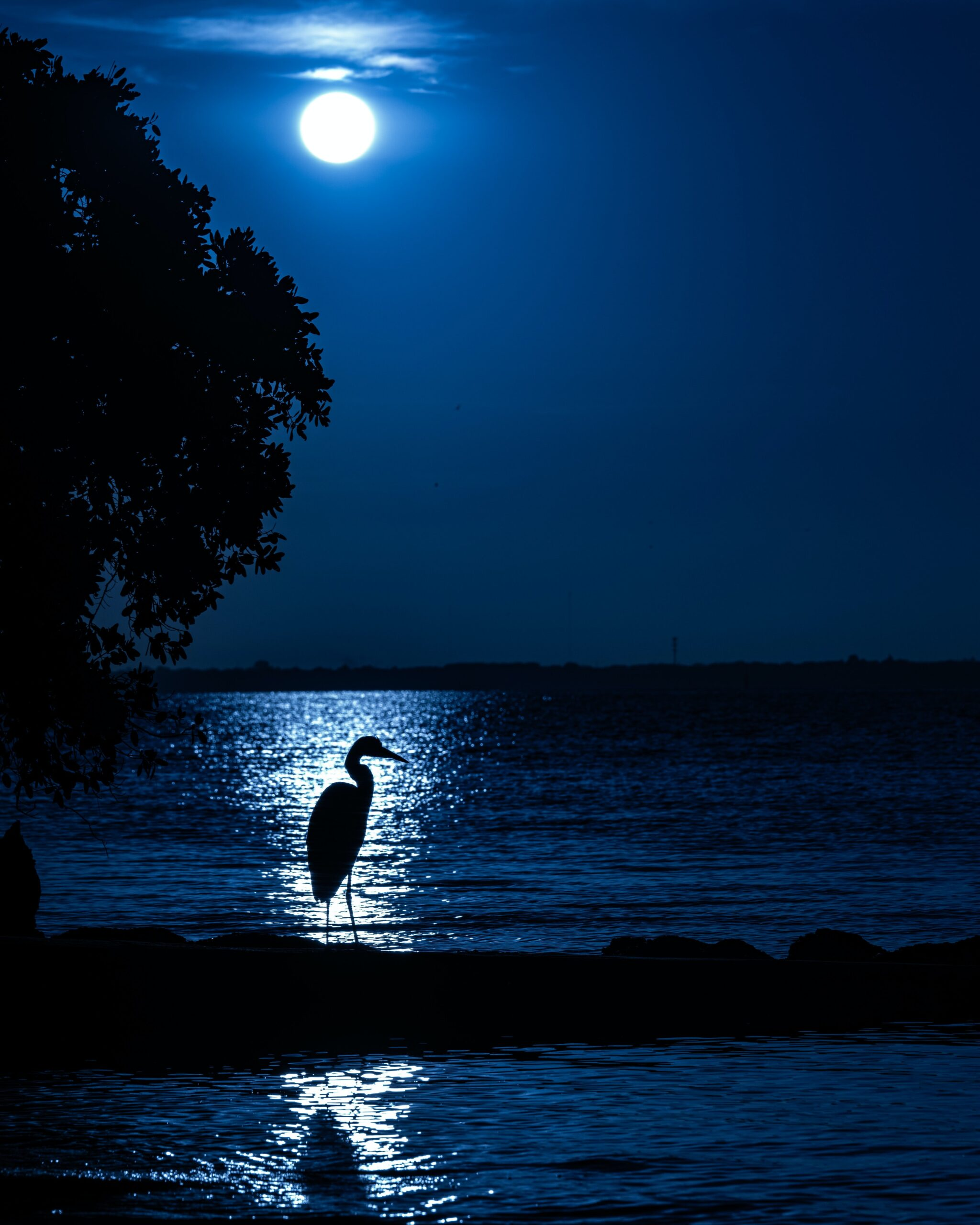 jesse-adair--GBH in foreground with backrground of night ocean moonlight over water-unsplash