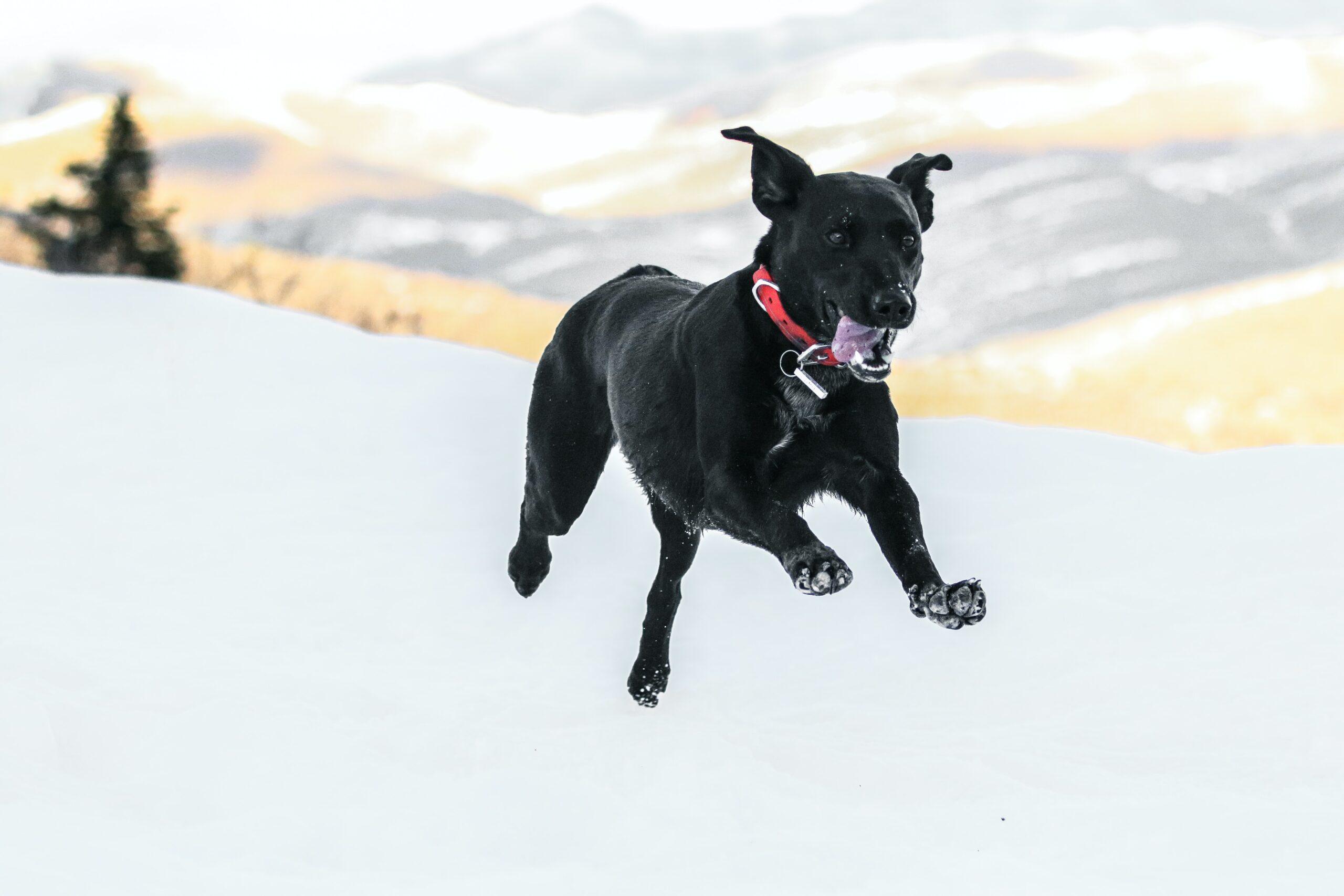 patrick-hendry-black dog in full sprint run-unsplash