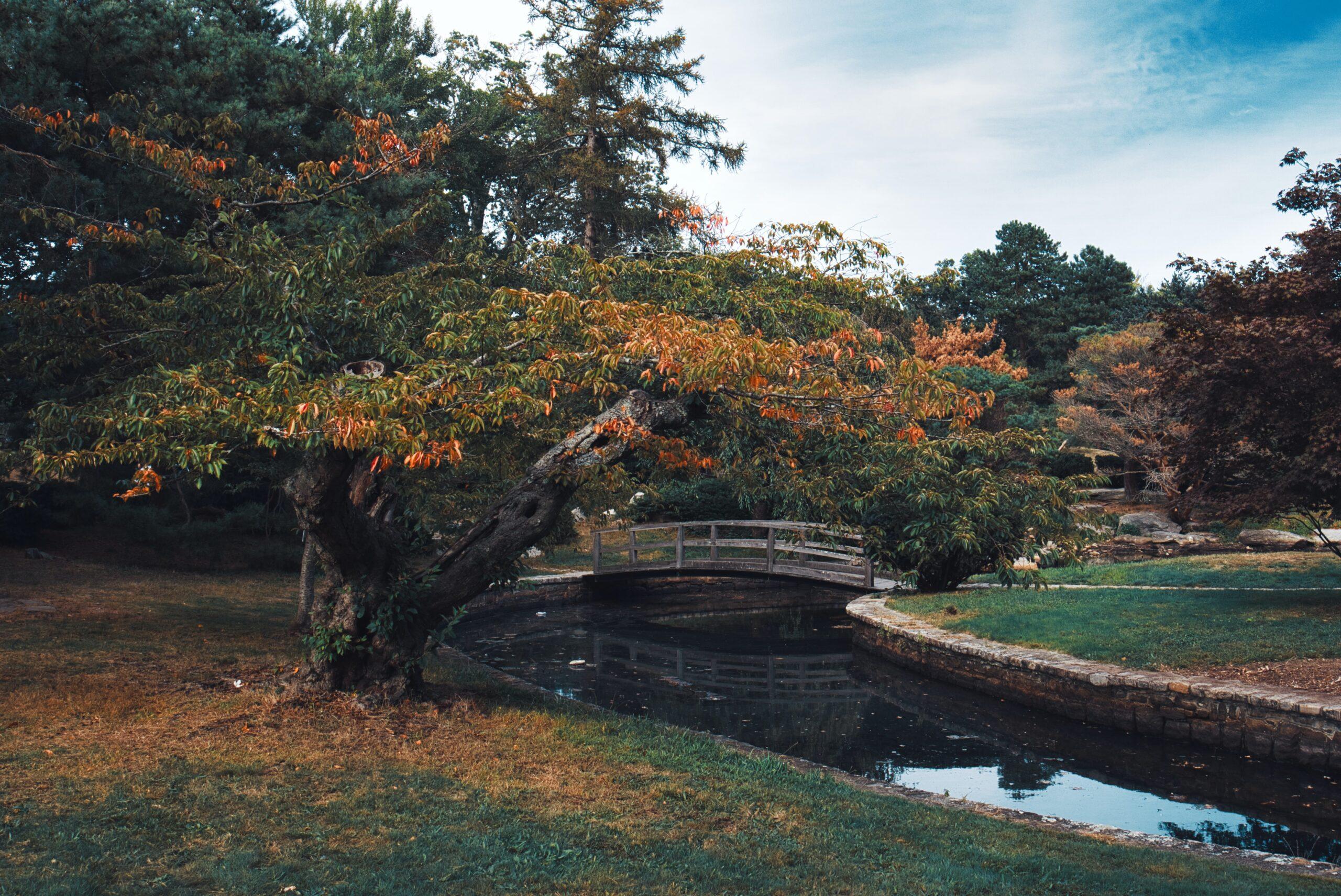 andrew-thornebrooke-Tokyo Gardens with stream and natural bridge-unsplash