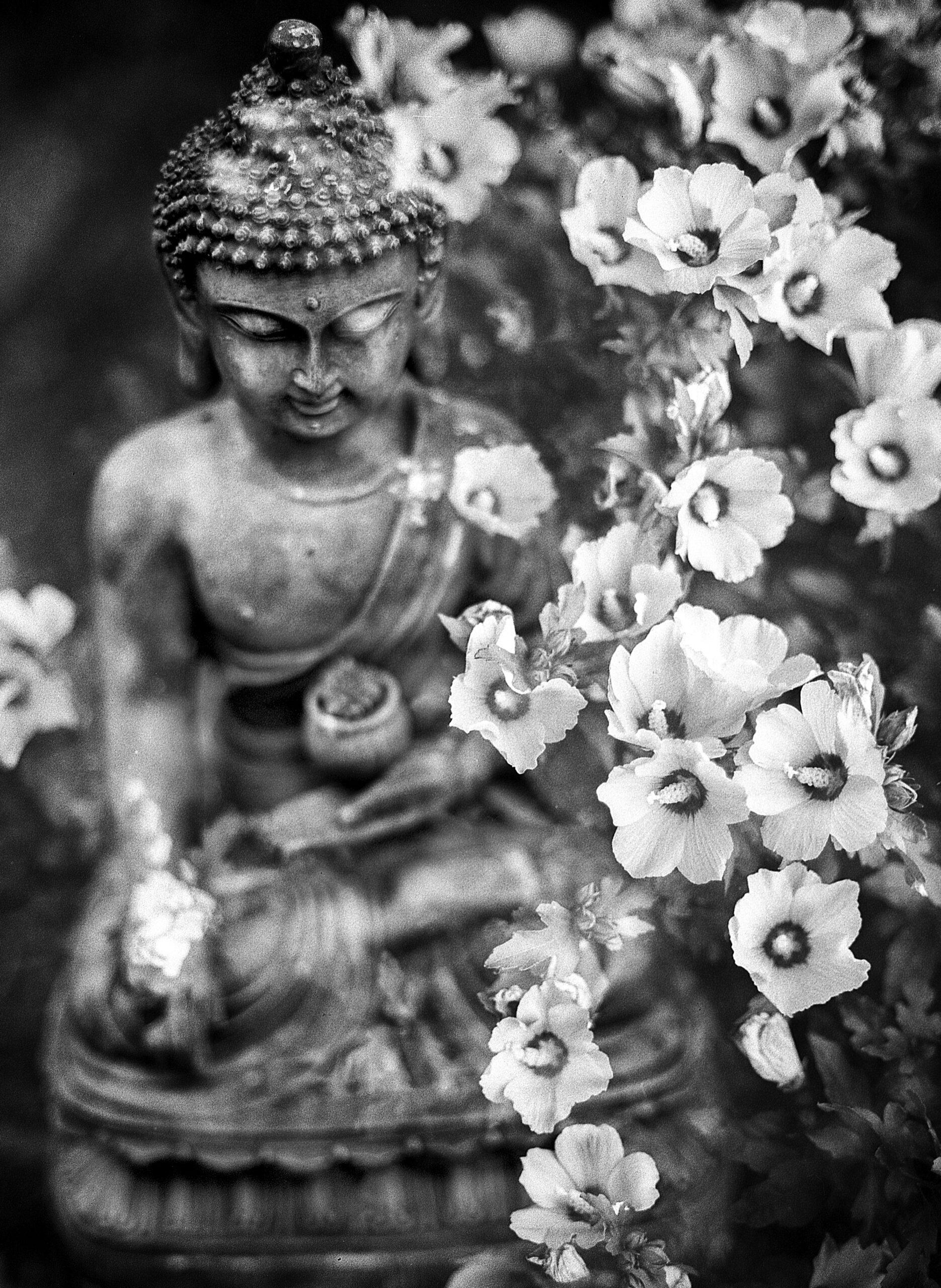 benjamin-balazs-Buddha statue graced by flowers -unsplash