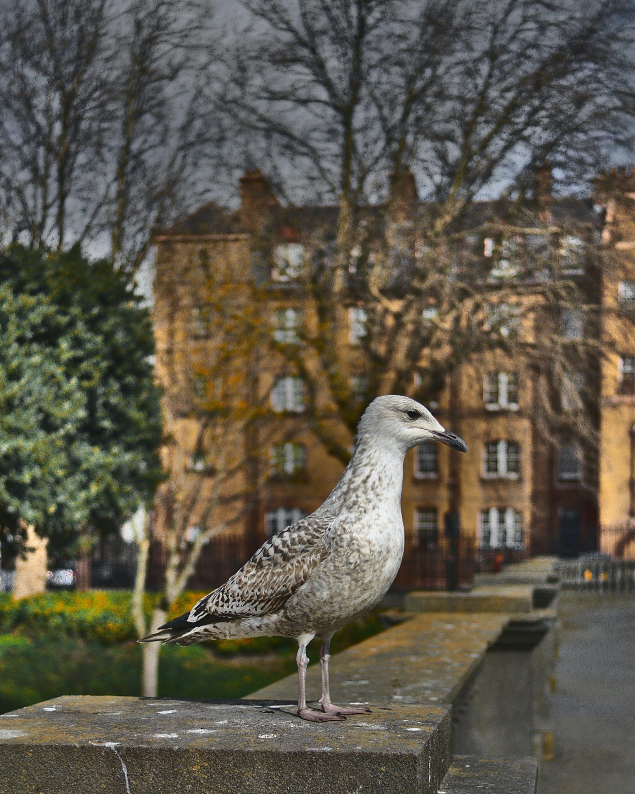 jonas-stolle-Pigeon up close-unsplash
