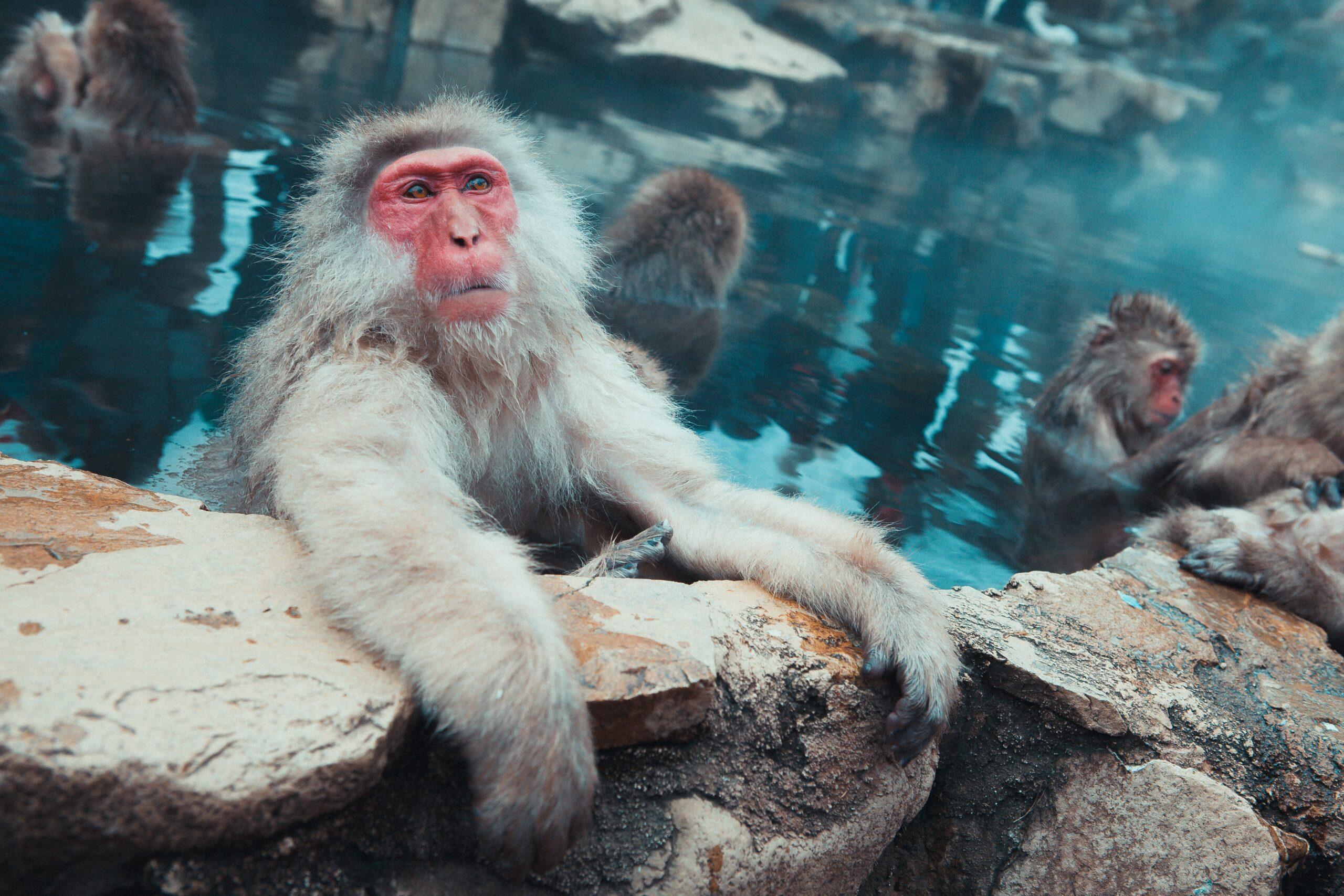 jonathan-forage-Monkey holding on with both hands around log-unsplash
