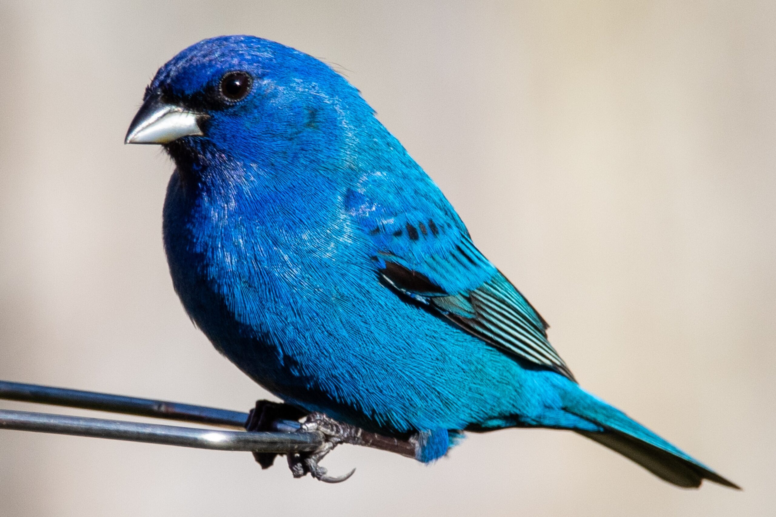 Bluebird on branch by Joshua j Cotten on Unsplash