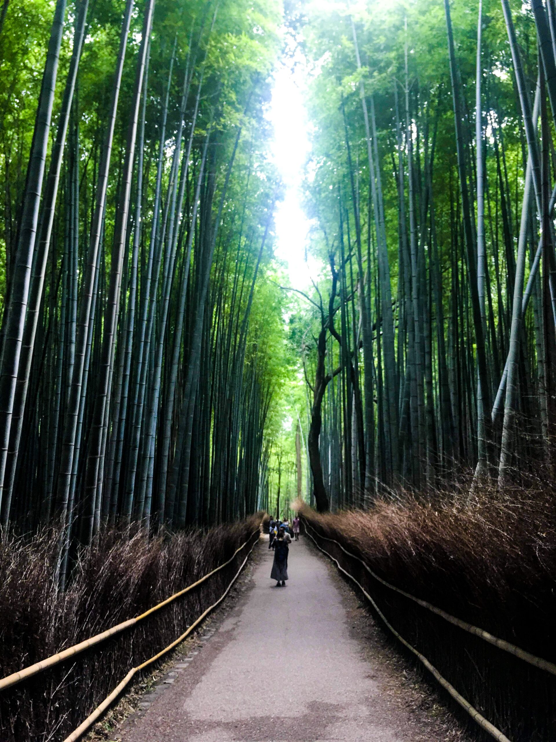 kon-karampelas-Bamboo Forest-unsplash