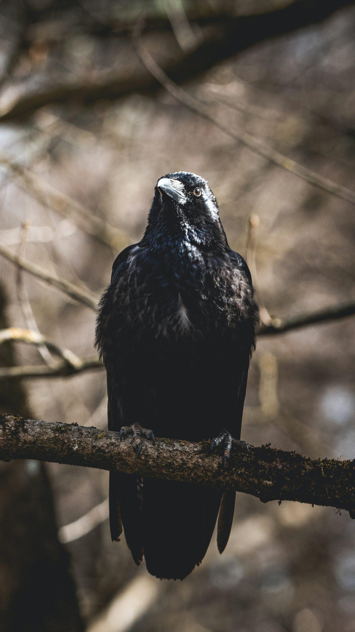 Raven on tree branch by Valentin Petkov on Unsplash